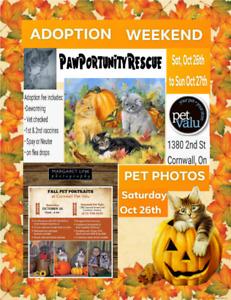 Adoption Weekend & Pet Photographer on location!