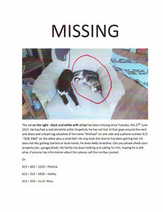 MISSING MALE CAT