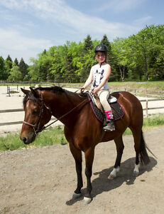 One on one riding lessons- October discount Peterborough Peterborough Area image 7