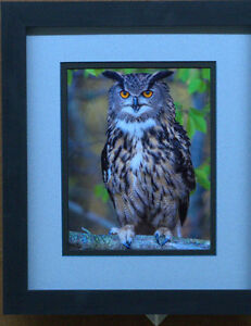 professionally framed and matted pictures  SALE Sarnia Sarnia Area image 7