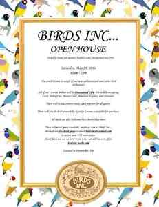 BIRDS INC... IS HOSTING ANOTHER OPEN HOUSE ATTEND ON FACEBOOK