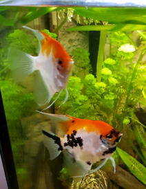 Tropical fish for sale N14