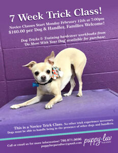 Novice Trick Classes at Puppy Luv Paradise!!