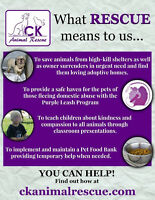 VOLUNTEER TO SAVE A DOG'S LIFE!