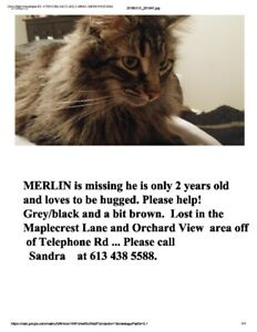 LOST: Merlin is Missing