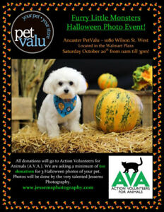 Halloween Pet Photo Event