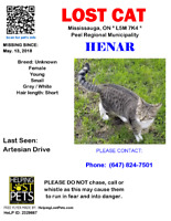 Have you seen our cat? -$REWARD$