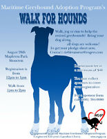 Maritime Greyhound Adoption Programs Walk for Hounds