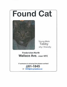 Found - tabby on Wallace Avenue northside