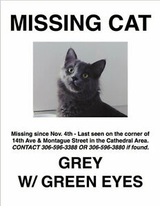 MISSING/LOST Grey cat w/ green eyes REWARD TBD