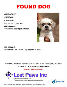 Looking for Owner - Please contact Lost Paws Inc
