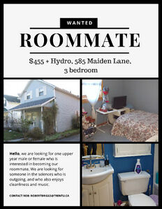 585 Maiden Lane Roommate Wanted