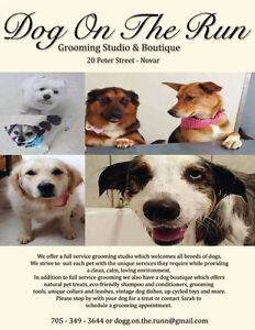 Dog Grooming Services located  in Novar