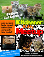 Cat Lovers! Kitchener Kitty Meetup!!!