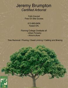 Tree Service / Arborist Work Belleville Belleville Area image 1