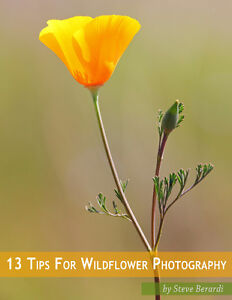 Book - How to Take Wildflower Photographs