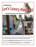 UNIQUE BOARDING FACILITY FOR CATS - LEOS LUXURY HIDEAWAY