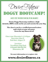 Get fit with your dog! Join our Outdoor bootcamp!
