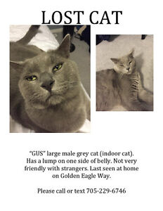 Missing Cat - Cundles and Livinstone Area