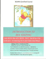 Have an Interest in Honey Bees? Introduction To Bee Keeping