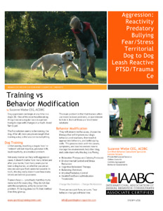 Stop Dogs From Lunging, Barking, and Biting