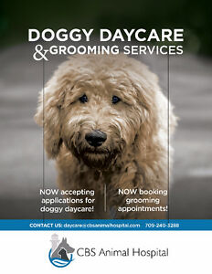 Doggy Daycare & Grooming Services