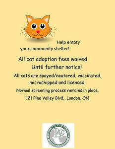 ***ANIMAL CARE & CONTROL GIVING AWAY CATS/KITTENS FREE!!*** London Ontario image 1