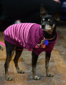 **Sweet Rose - MIN PIN cross is available for adoption****