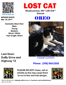 Lost Dsh cat black and white male neutered