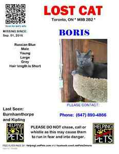 Missing Russian Blue - Reward