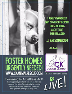 Be a Hero and Foster a Rescue Dog!!!!!
