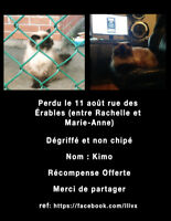 CHAT PERDU MONTREAL