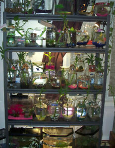 Betta Fish M/F + Established Homes for Sale!