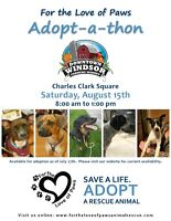For the Love of Paws Adopt-A-Thon at Downtown Farmers Market
