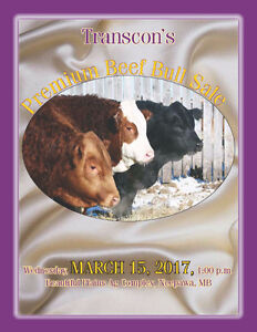Transcon's Premium Beef Simmental Bull Sale, Wed. March 15, 2017