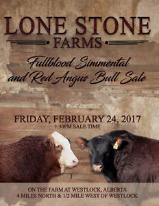 Lone Stone Farms Fullblood Simmental and Red Angus Bull Sale