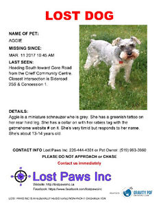 Lost Dog Cambridge Area