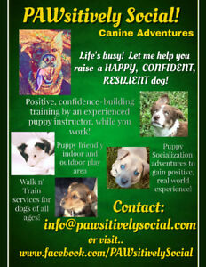 PAWsitively Social Canine Adventures