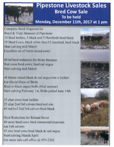 Herd Dispersals and Herd Reduction Bred Cows