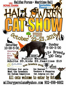Halloween CAT SHOW At the Forum