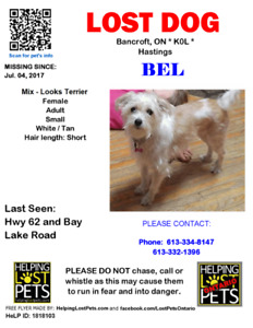 MISSING DOG.  LOOKS TERRIER MIX