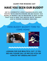 Have you see our cat Buddy?