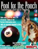 Pool for the Pooch - Dooly's Mountain Road