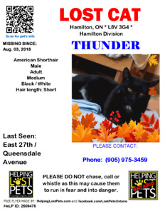 Missing Black Cat Named Thunder