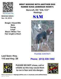 Lost dogs in Bancroft