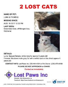 2 Cats Missing Morgan Ave Kitchener