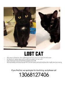 Looking for my sassy cat!