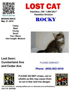 LOST  5 MONTH OLD KITTEN - Rocky