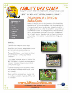 Dog Training -  Agility Day Camp July 17th!