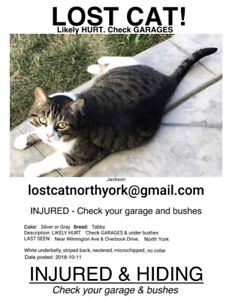 Lost Cat!   INJURED & HIDING!